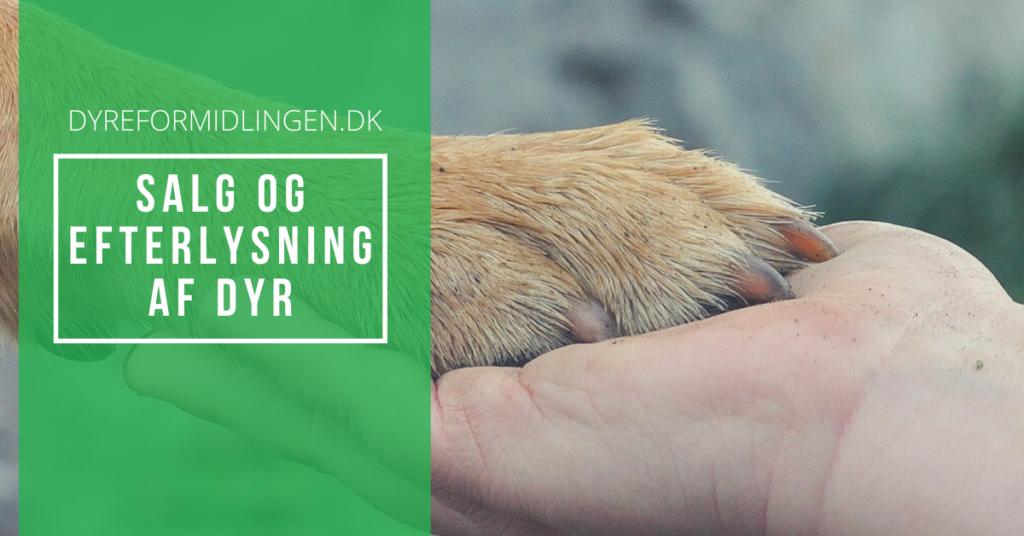SALG OG EFTERLYSNING AF DYR, hund, kat, marsvin, kanin, hest, fugl, krybdyr