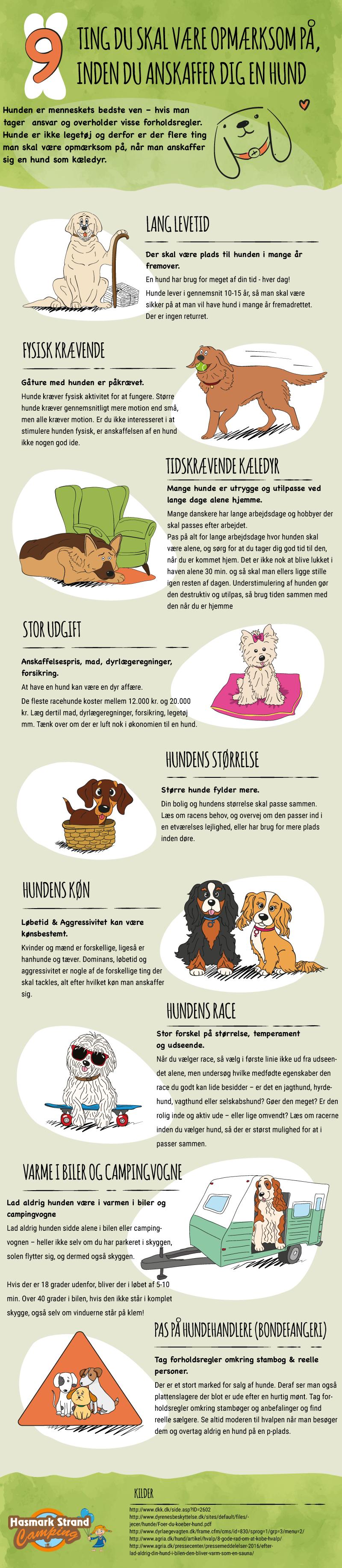 hund hundehvalp hvalp køb anskaffelse opmærksom inden køb