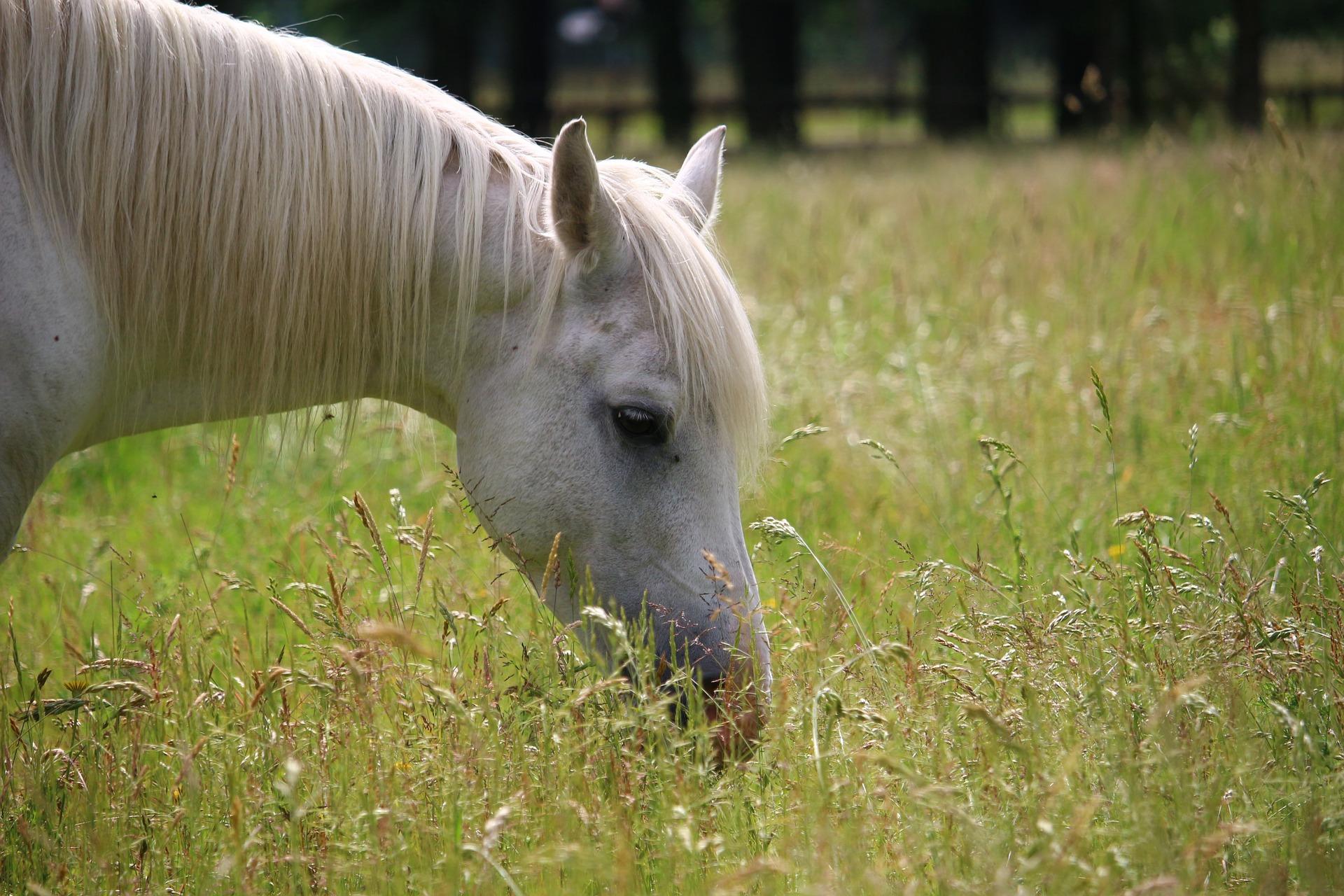 heste føl