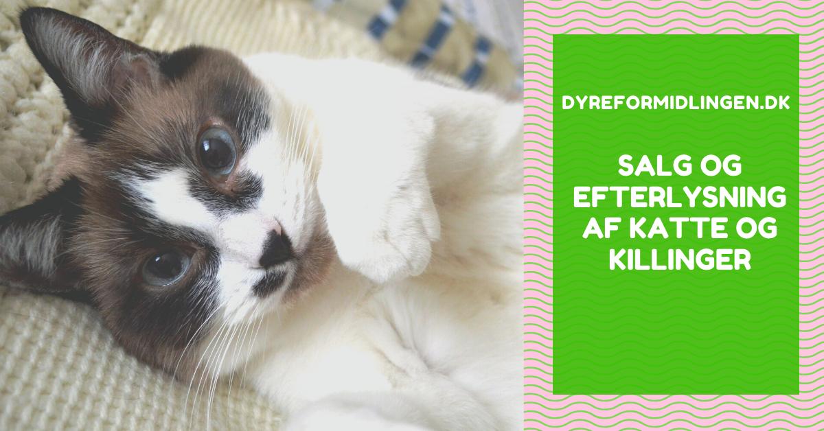 salg af katte og salg af killinger køb kat køb killing efterlysning kat killing