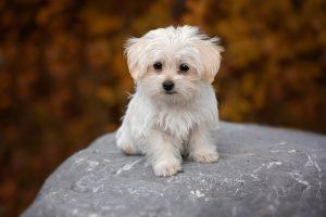 hvalp startpakke pakke start hvalpepakken hund hundehvalp hunde