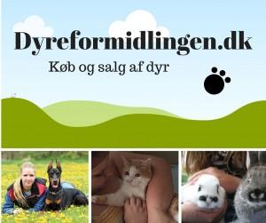 Dyreformidlingen.dk FB opslag