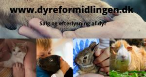 www.dyreformidlingen.dk salg køb efterlysning hund hvalp kat killing kanin hest marsvin dyrefinder