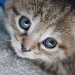 kitten-793652_640
