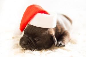 jul hvalp hund gave