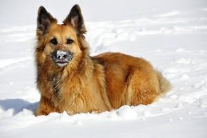 vinter hund kold kulde sne