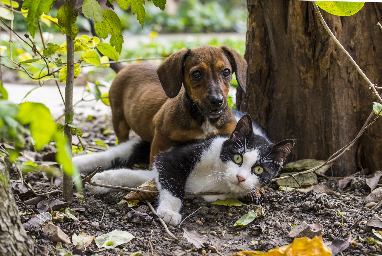 Rørig Stødhalsbånd til hunde og katte TV-15