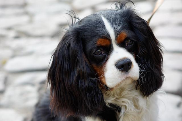 familiehund der ikke fælder