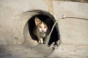 herreløs kat killing