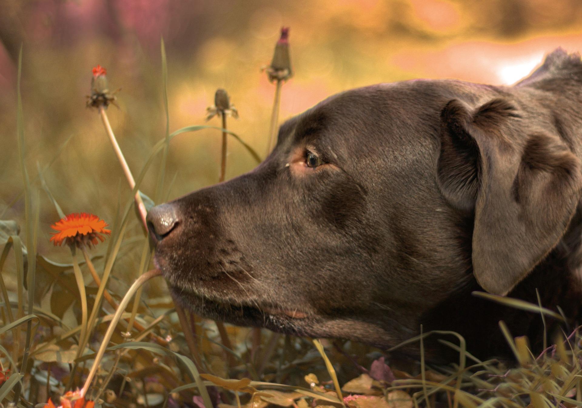 hund-hvalp-blomst-plante