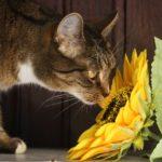 kat-kattekilling-blomst-plante