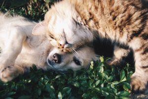 hund-kat-hvalp-killing-venner