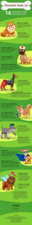 hund hvalp fordele