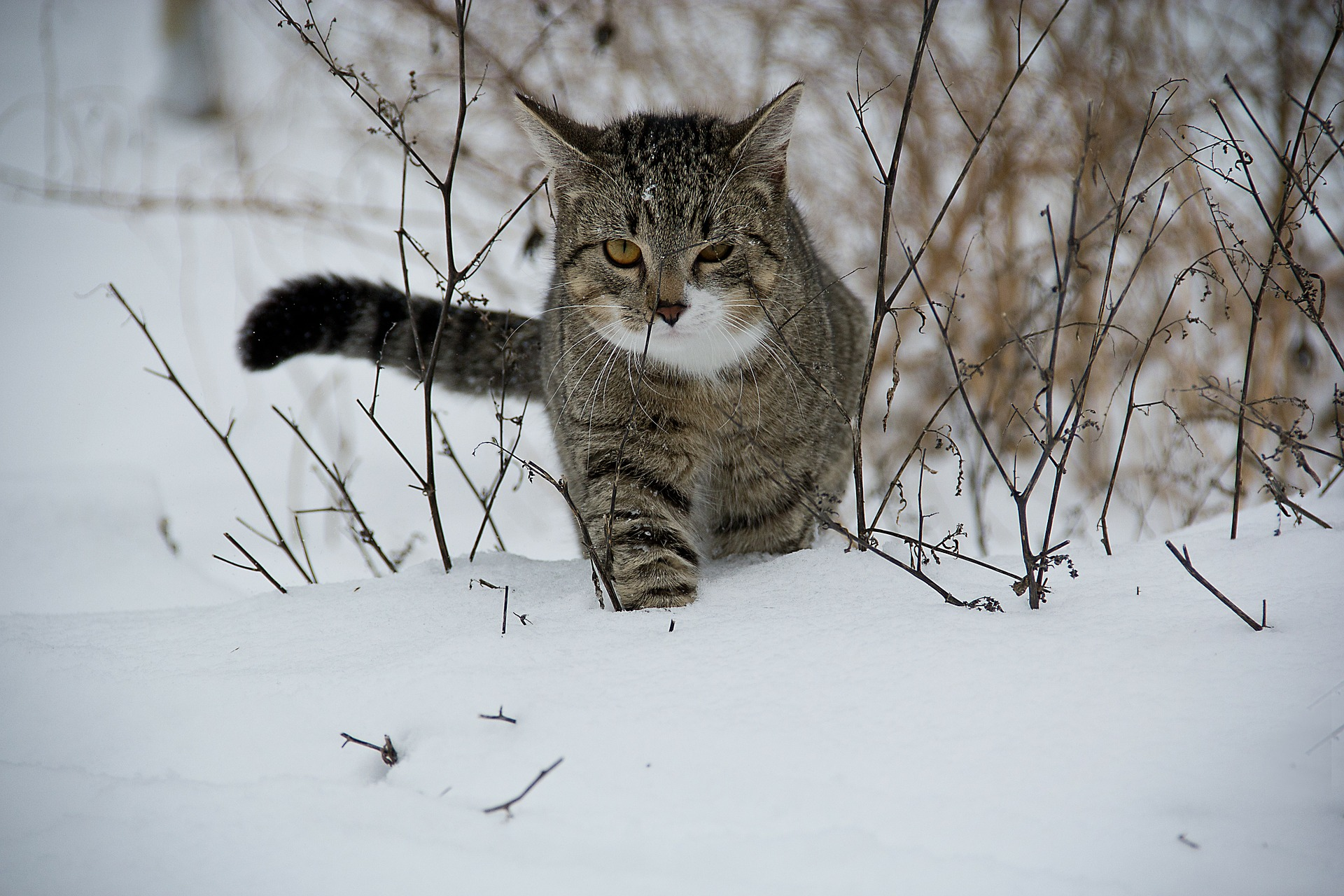 kat killing sne frost frostvejr
