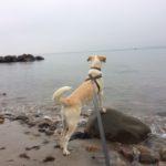 Frida på stranden