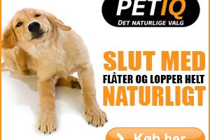 naturmedicin til hund, hvalp, kat, killing, hest, pony