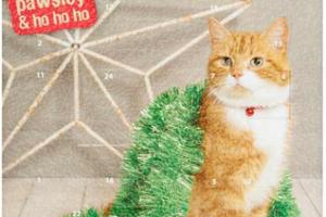 kattens julekalender