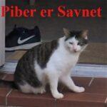 Piber er savnet_lysere