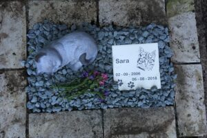 miste kæledyr, miste hund kat kanin marsvin hamster hest dyr, sorg over tab