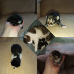 Cat mother and kittens