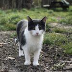 Meget savnet 1-årig kat