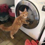 Vores elskede kat er væk - Stor dusør gives
