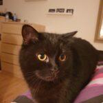 Sød og nysgerrig kat