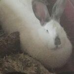 Kanin bortgives til rette hjem