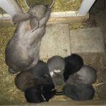 Kaninunger søger nyt hjem
