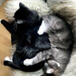 To dejlige katte søger nyt forever hjem