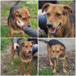 "Molo ( ""Gratis"" adoption)"
