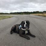 Otto søger nyt dejligt hjem 🐶
