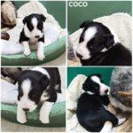 Coco(reserveret)
