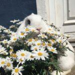 Kanin sælges til godt hjem