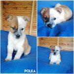 Polka (Reserveret)