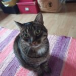 Min dejlige kat er ikke kommet hjem😢
