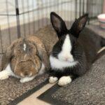 Jeg sælger mine to dejlige kaniner...