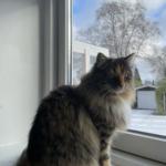 Kat forsvundet