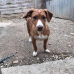 Skønne Ida til adoption bare 9 måneder