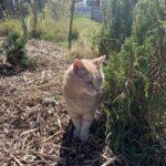 Hvem har set min kat
