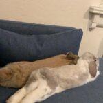 Kaniner savnes