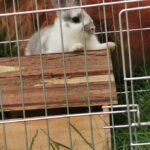 Supersød kaninunge søger nyt hjem
