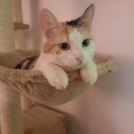 Hun kat søger nyt hjem