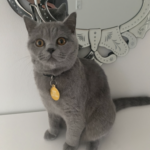 Mister kat