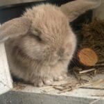 8 søde kaninunger til salg