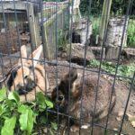 Kaniner hun og han