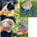 Kaniner søger hjem