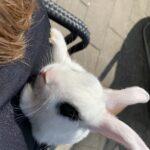 Nysgerrig glad kaninunge