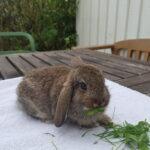Tre søde kaninunger