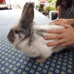 Mor og datter kanin leder efter et nyt hjem